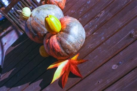 autumnal-tints01.jpg