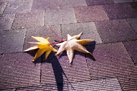 autumnal-tints3.jpg