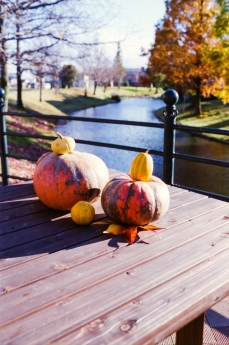 autumnal-tints4.jpg