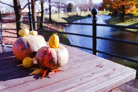 autumnal-tints5.jpg