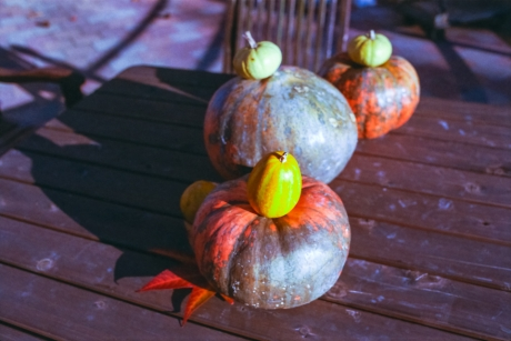 autumnal-tints6.jpg