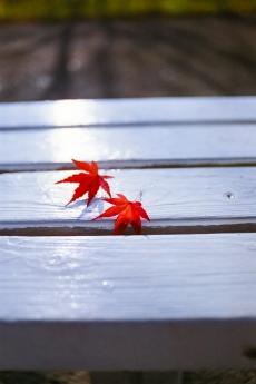 fall_01.jpg