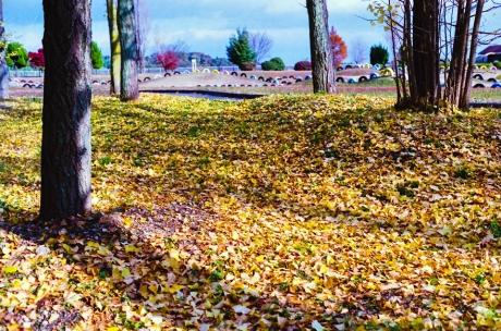 fall_03.jpg