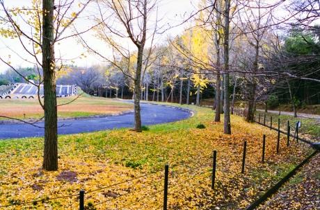fall_04.jpg