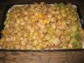 H27.12.24オレンジチェリーの実収穫④(350P~)@IMG_7319