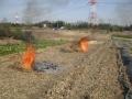 H28.2.19オレンジチェリーの枯枝焼却@IMG_7807