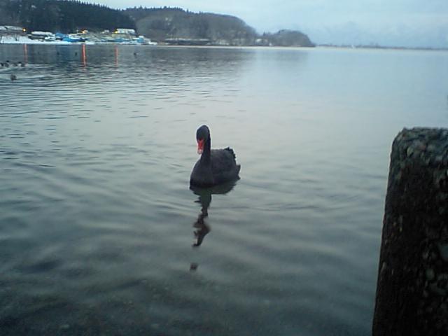 16-02-05-1黒鳥