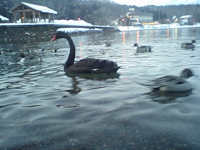 16-02-05-3黒鳥