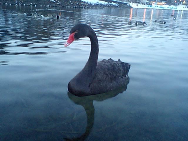 16-02-05-4黒鳥