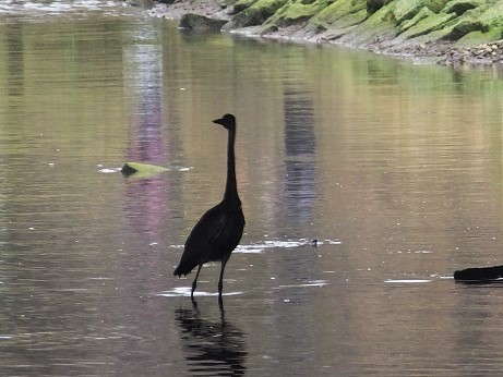 知利別川の鳥1