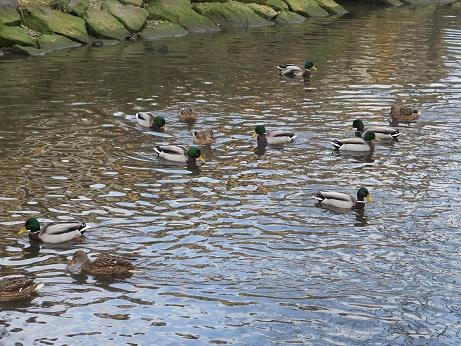 知利別川の鳥2