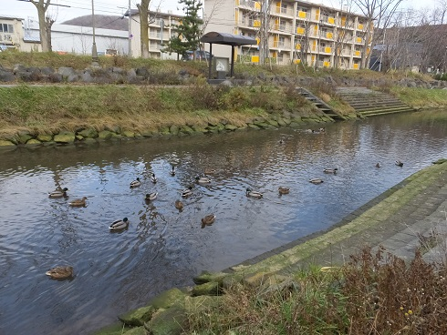 知利別川の鳥3