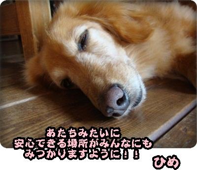 ひめ375あっぷ