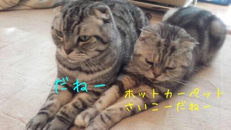 201511041447154a9.jpg