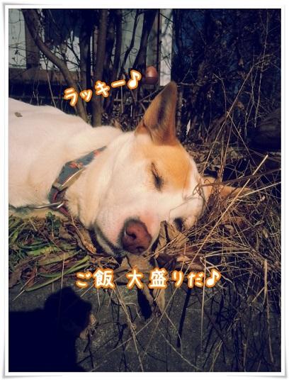 20160122_114506.jpg