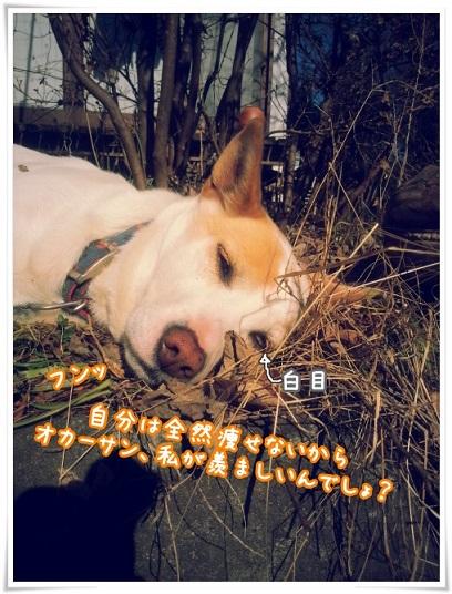 20160122_114512.jpg