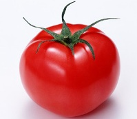 いんげんとトマトのわさびマヨポン トマト写真