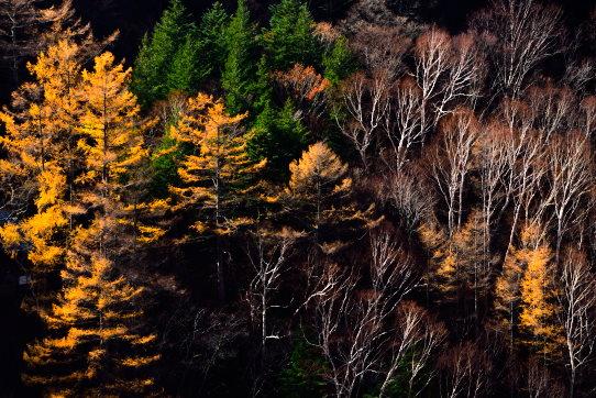 晩秋の森・米子瀑布付近にて