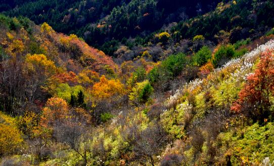 紅葉彩る谷