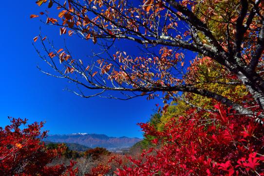 青空に紅葉と新雪の西駒ヶ岳映える