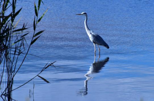 鷺のいる湖畔