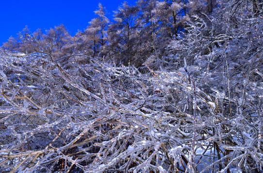 雨氷の木々