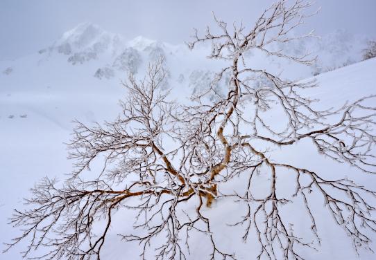 霧氷の岳樺とサギダルの頭