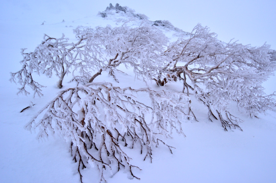 凍てつくベルグラの岳樺と岩峰