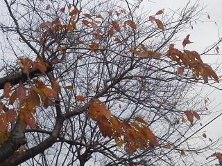 冬15-12-12