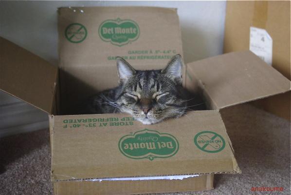 箱入り息子1