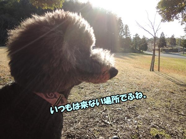 DSCN360120160301a.jpg