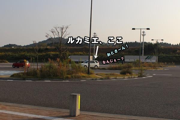IMG_089820151027.jpg