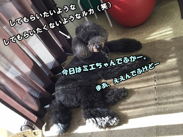 IMG_729420160301.jpg
