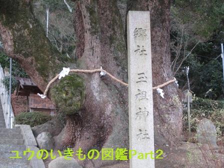玉祖神社4