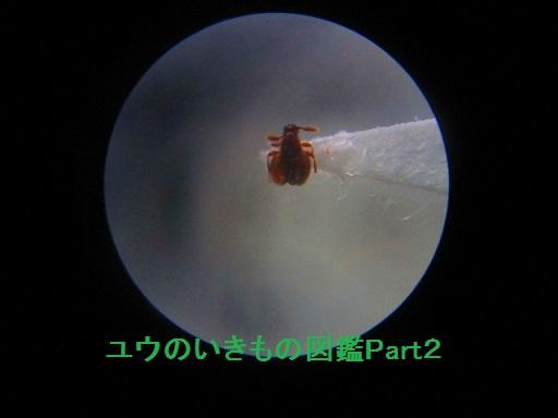 アリヅカムシ4