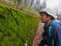美しい苔にうっとり