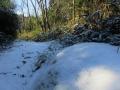 笹薮のある小道