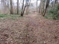 刈り払われたままの旧観察路