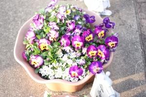 春の庭2016_2