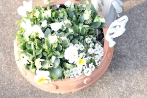 春の庭2016_3