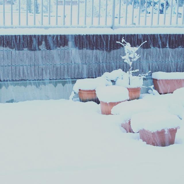IMG_20160118_071918雪
