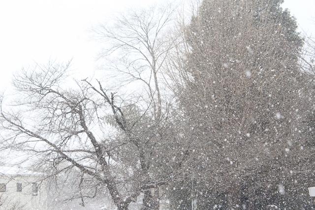 0120IMG_8290雪