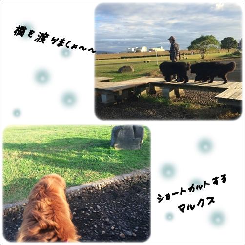 20151110 河川敷