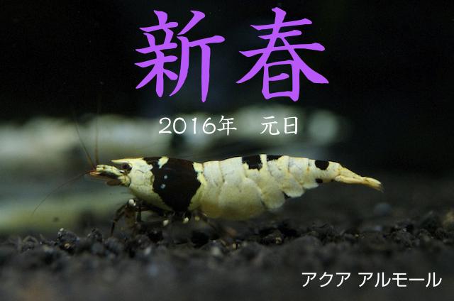 2016新春