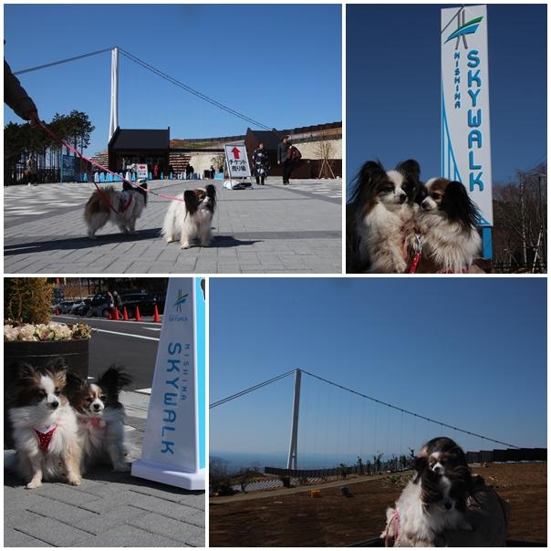 三島大橋5