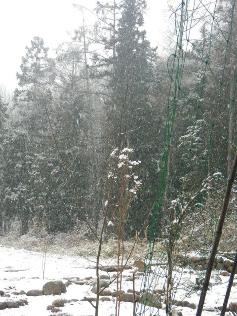 貴重な青・雪景色