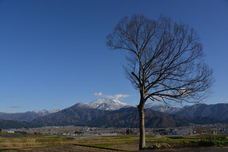 冬晴れに樹-1