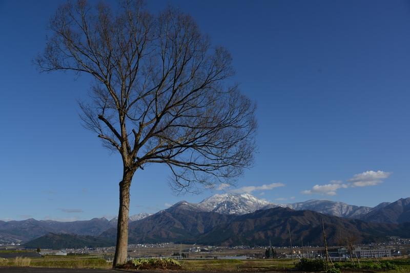 冬晴れに樹-3