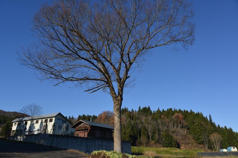 冬晴れに樹-2