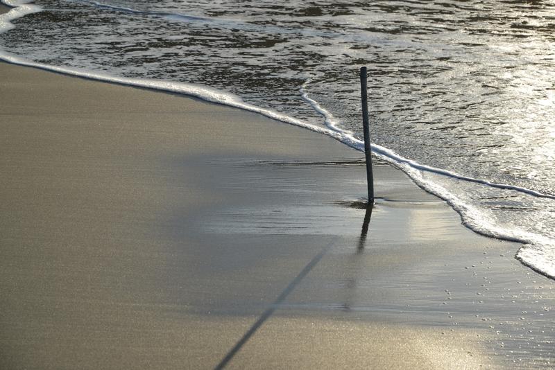 浜辺に木-1